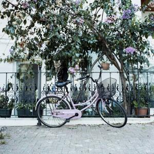 Julia Smirnova, Cat on a pink bicycle, 2014, Istanbul, Nimmesgern, Starnberg, Nimmesgernstarnberg, Galerie, Ammerland